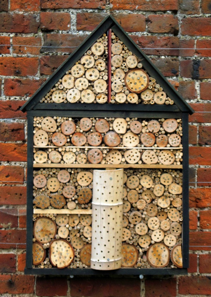 Mason bees nesting in drilled wood, by Jenny Mackness.