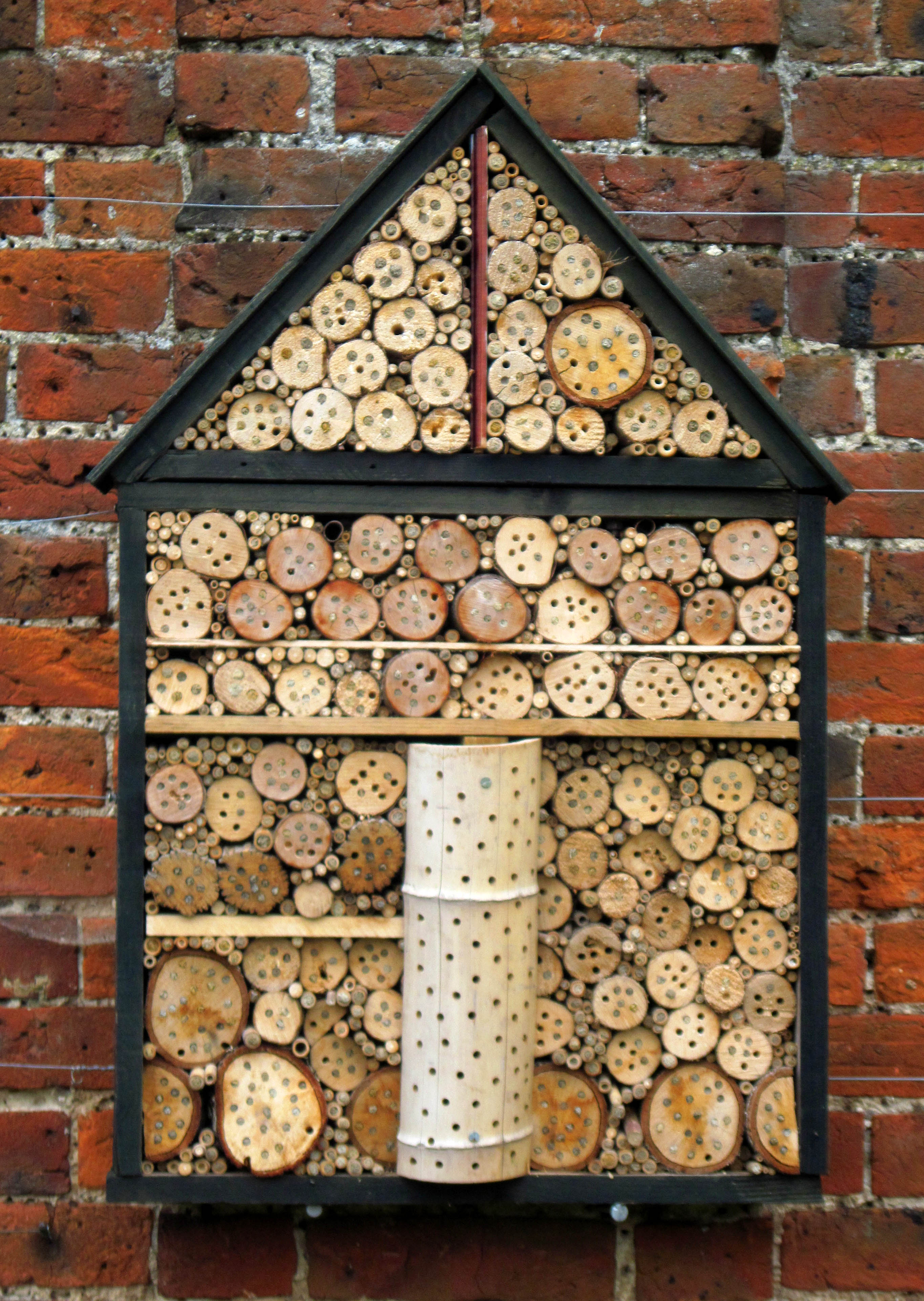 mason bees nesting in drilled wood by jenny mackness